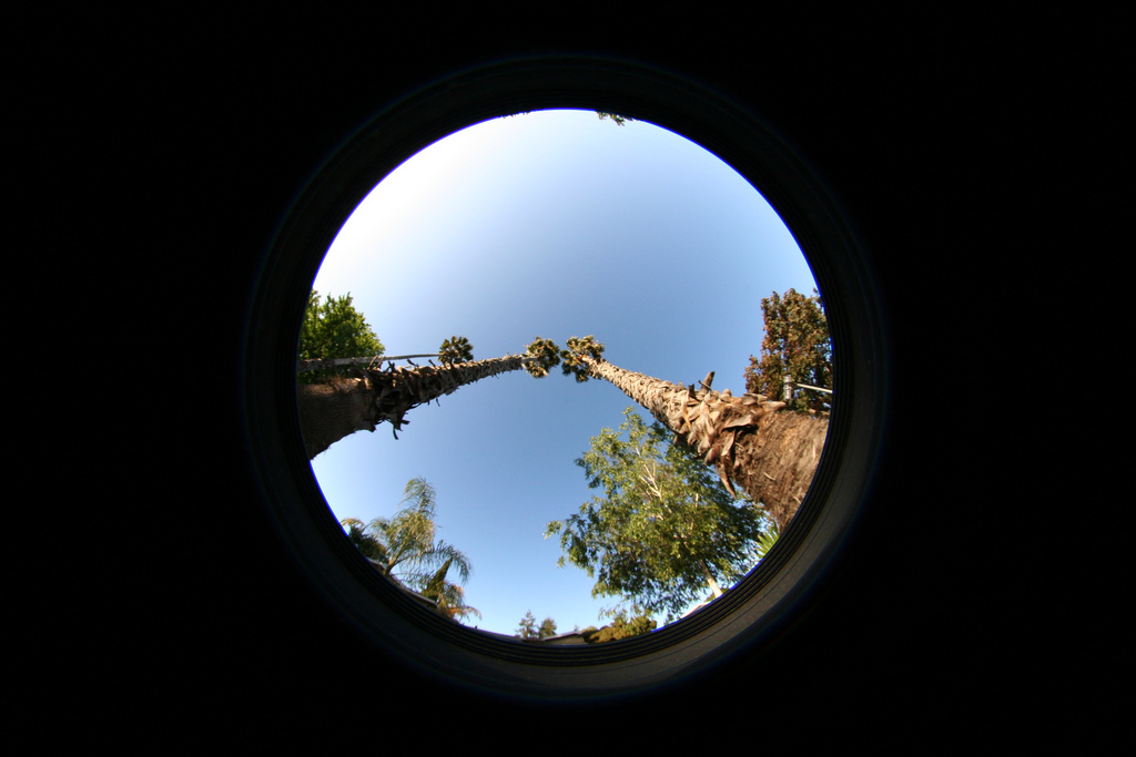 Palmtrees Fisheye