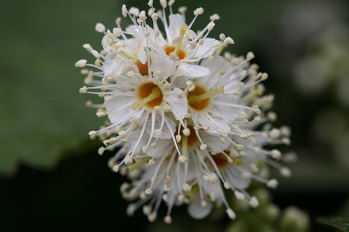 White Flowers Close up